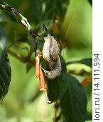 Экзотическая птица нектарница. Стоковое фото, фотограф Юлия Бубличенко / Фотобанк Лори