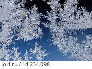 Купить «Frost feathers on a window, Greater Sudbury (Lively), Ontario, Canada», фото № 14234098, снято 6 июля 2020 г. (c) age Fotostock / Фотобанк Лори