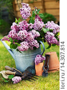 Купить «Metal watering can filled with Lilac with terracotta pots and hand tools.», фото № 14307814, снято 21 мая 2012 г. (c) age Fotostock / Фотобанк Лори