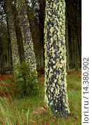 Купить «Moss and lichens on tree, North Island, New Zealand», фото № 14380902, снято 15 ноября 2018 г. (c) age Fotostock / Фотобанк Лори