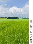 Купить «Barley crop in landscape at Asthall, The Cotswolds, Oxfordshire, UK», фото № 14430158, снято 21 августа 2019 г. (c) age Fotostock / Фотобанк Лори