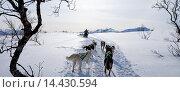 Купить «Alaskan Huskies dog-sledding at Villmarkssenter wilderness centre on Kvaloya Island, Tromso in Arctic Circle, Northern Norway», фото № 14430594, снято 21 октября 2018 г. (c) age Fotostock / Фотобанк Лори