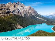 Купить «Beautiful Peyto Lake in the Banff National Park, Alberta, Canada», фото № 14443150, снято 3 июля 2020 г. (c) age Fotostock / Фотобанк Лори