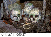Купить «Skulls of tribal chiefs and warriors, Solomon Islands», фото № 14666274, снято 2 июня 2020 г. (c) age Fotostock / Фотобанк Лори