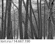 Купить «tree trunk alder erlenstamm lipp», фото № 14667190, снято 16 июля 2019 г. (c) PantherMedia / Фотобанк Лори