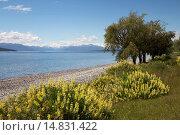Lake Te Anau, Te Anau, Southland, South Island, New Zealand, Pacific. Стоковое фото, фотограф Stuart Black / age Fotostock / Фотобанк Лори