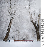 Снежная очаровательная зимняя пора. Стоковое фото, фотограф Екатерина Ветошкина / Фотобанк Лори