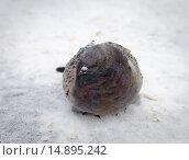 Олубь в ожидании крошки хлеба. Стоковое фото, фотограф Екатерина Ветошкина / Фотобанк Лори