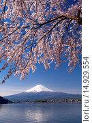 Купить «Mt Fuji, Yamanashi, Koshinetsu, Japan», фото № 14929554, снято 14 декабря 2018 г. (c) age Fotostock / Фотобанк Лори
