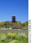 Купить «Lotus field, rape blossoms, Bitchu Kokubu temple, Five-Storied Pagoda, Soja, Okayama, Sanyo, Japan», фото № 14936378, снято 26 марта 2019 г. (c) age Fotostock / Фотобанк Лори