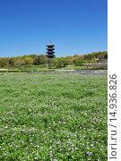 Купить «Lotus field, Bitchu Kokubu temple, Five-Storied Pagoda, Soja, Okayama, Sanyo, Japan», фото № 14936826, снято 26 марта 2019 г. (c) age Fotostock / Фотобанк Лори