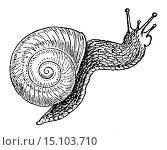 Burgundy snail, Roman snail, edible snail or escargot (Helix pomatia), illustration from Soviet encyclopedia, 1927. (2012 год). Редакционное фото, фотограф Ivan Vdovin / age Fotostock / Фотобанк Лори