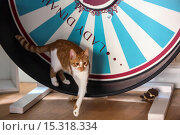Купить «If your fe-line like you want to have lunch with your kitty then why not head to London's first ever cat café! Lady Dinah's Cat Emporium allows visitors...», фото № 15318334, снято 9 июня 2014 г. (c) age Fotostock / Фотобанк Лори