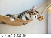Купить «If your fe-line like you want to have lunch with your kitty then why not head to London's first ever cat café! Lady Dinah's Cat Emporium allows visitors...», фото № 15323394, снято 9 июня 2014 г. (c) age Fotostock / Фотобанк Лори