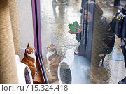 Купить «If your fe-line like you want to have lunch with your kitty then why not head to London's first ever cat café! Lady Dinah's Cat Emporium allows visitors...», фото № 15324418, снято 9 июня 2014 г. (c) age Fotostock / Фотобанк Лори