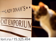 Купить «If your fe-line like you want to have lunch with your kitty then why not head to London's first ever cat café! Lady Dinah's Cat Emporium allows visitors...», фото № 15325494, снято 9 июня 2014 г. (c) age Fotostock / Фотобанк Лори