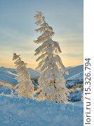 Купить «Лиственница в снегу на краю перевала. Зима. Закат. Вечер. Магаданская область. Колыма», фото № 15326794, снято 1 января 2014 г. (c) Юрий Слюньков / Фотобанк Лори