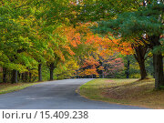 Купить «Road curving though fall colors in woods in Chestnut Ridge Park in New York State.», фото № 15409238, снято 9 октября 2014 г. (c) age Fotostock / Фотобанк Лори