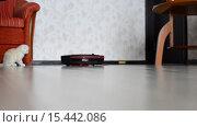 Купить «Котенок играет с роботом-пылесосом», видеоролик № 15442086, снято 5 декабря 2015 г. (c) Володина Ольга / Фотобанк Лори