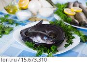 Купить «Close up view at sea eel fish ready for cooking», фото № 15673310, снято 30 марта 2020 г. (c) Яков Филимонов / Фотобанк Лори