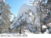 Купить «Ель в когтях у Грифа. Природные скульптуры из снега, ели в снегу. Природный парк Таганай», фото № 15695450, снято 10 марта 2013 г. (c) Юрий Карачев / Фотобанк Лори
