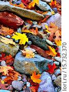 Купить «A vertical image of river rocks and fallen leaves from the deciduous maple trees.», фото № 15732370, снято 10 октября 2014 г. (c) age Fotostock / Фотобанк Лори