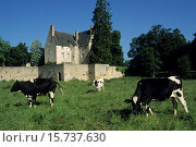 Купить «cattle in front of Chateau de Sache, where the French writer Honore de Balzac wrote between 1825 and 1848 some of his finest works in the series La Comedie...», фото № 15737630, снято 22 января 2015 г. (c) age Fotostock / Фотобанк Лори