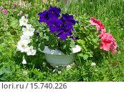 Купить «Вазон с Петунией (лат. Petunia) в саду», эксклюзивное фото № 15740226, снято 22 июня 2015 г. (c) Елена Коромыслова / Фотобанк Лори