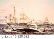 Купить «Whaling off the Cape of Good Hope in the mid 19th century. After a lithograph by French artist Louis Le Breton, 1818 - 1866.», иллюстрация № 15820622 (c) age Fotostock / Фотобанк Лори