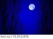 Лунный пейзаж в лесу. Стоковое фото, фотограф Нефедьев Леонид / Фотобанк Лори