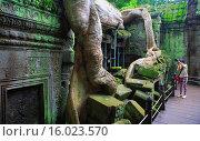 Roots of spung tree over ruins of Ta Prohm temple (Rajavihara) (1186), Angkor, Cambodia. Стоковое фото, фотограф Ivan Vdovin / age Fotostock / Фотобанк Лори