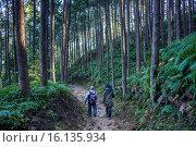 Купить «Pilgrims in Kumano Kodo near Kumano Hongu.», фото № 16135934, снято 18 июня 2019 г. (c) age Fotostock / Фотобанк Лори