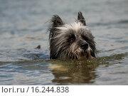 Купить «Eloschaboro Portrait», фото № 16244838, снято 14 июля 2009 г. (c) age Fotostock / Фотобанк Лори