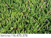 Купить «Kaktus Pflanzen», фото № 16475378, снято 9 октября 2007 г. (c) easy Fotostock / Фотобанк Лори