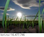 Sichtweise einer Feldmaus. Стоковое фото, фотограф Maxi Thate / easy Fotostock / Фотобанк Лори