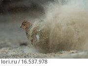 Sandbad. Стоковое фото, фотограф Yann Sochaczewski / easy Fotostock / Фотобанк Лори