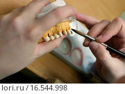 Купить «Zahnmodell eines Kiefers», фото № 16544998, снято 25 февраля 2005 г. (c) easy Fotostock / Фотобанк Лори