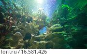 Купить «Акула плавает в аквариуме океанариума», эксклюзивный видеоролик № 16581426, снято 8 ноября 2015 г. (c) Литвяк Игорь / Фотобанк Лори