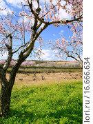 Pink almond tree flowers on early Mediterranean spring. Стоковое фото, фотограф Tono Balaguer / easy Fotostock / Фотобанк Лори