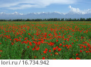 Купить «Field of red poppies, Kazakhstan», фото № 16734942, снято 14 мая 2007 г. (c) easy Fotostock / Фотобанк Лори
