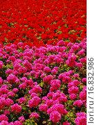 Купить «Garten_006», фото № 16832986, снято 22 октября 2018 г. (c) easy Fotostock / Фотобанк Лори