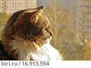 Купить «Пушистый кот на фоне окна», фото № 16913554, снято 18 июня 2019 г. (c) Зезелина Марина / Фотобанк Лори