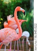 Купить «Flamingo», фото № 16945022, снято 10 декабря 2018 г. (c) easy Fotostock / Фотобанк Лори