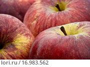 Äpfel. Стоковое фото, фотограф Heiko Eschrich / easy Fotostock / Фотобанк Лори