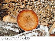 Купить «Дрова березовые», фото № 17157430, снято 28 мая 2012 г. (c) Евгений Суворов / Фотобанк Лори
