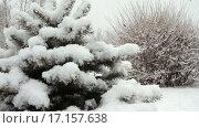 Купить «Снегопад  в парке», видеоролик № 17157638, снято 11 февраля 2015 г. (c) Курганов Александр / Фотобанк Лори