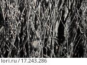 Купить «Naked branches of a bush», фото № 17243286, снято 18 ноября 2019 г. (c) easy Fotostock / Фотобанк Лори