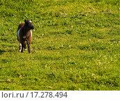 Купить «Goat kid on a grass», фото № 17278494, снято 25 марта 2019 г. (c) easy Fotostock / Фотобанк Лори