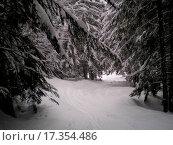 Купить «into the forest», фото № 17354486, снято 23 июля 2019 г. (c) easy Fotostock / Фотобанк Лори