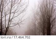 Купить «Fog», фото № 17464702, снято 23 марта 2019 г. (c) easy Fotostock / Фотобанк Лори